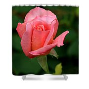 Rosey Shower Curtain