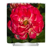 Rosey Rose Shower Curtain