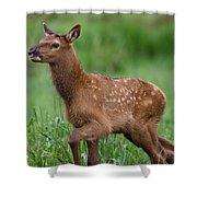 Rosie Elk Youngin Shower Curtain