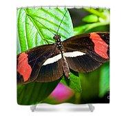 Rosina Butterfly Shower Curtain
