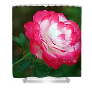 Rosy Reds And Whites Shower Curtain