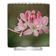 Rosy Rhododendron Shower Curtain
