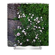 Rosy Rock Shower Curtain