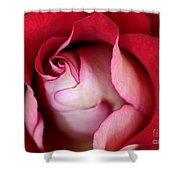 Rosy Rose Shower Curtain