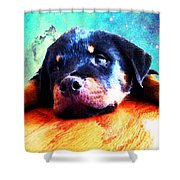 Rottie Puppy By Sharon Cummings Shower Curtain