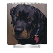 Rottweiler Dog Shower Curtain