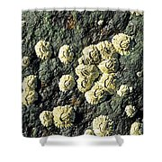 Rough Barnacles Shower Curtain