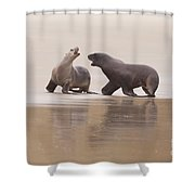 Rough Courtship Of Male And Female Hookers Sealions Shower Curtain