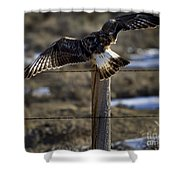 Rough-legged Hawk   #1865 Shower Curtain