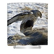 Rough-legged Hawk On A Mule Deer Kill Shower Curtain