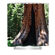 Round Meadow Giant Sequoia Portrait Shower Curtain