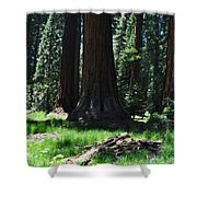 Round Meadow Sequoia Family Shower Curtain