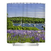 Round Pond Lupine Flowers On The Coast Of Maine Shower Curtain