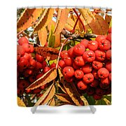 Rowan Berry Shower Curtain