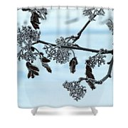 Rowan In Winter Shower Curtain