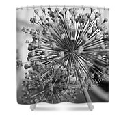 Rows Of Architecture  Shower Curtain