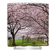 Rows Of Cherry Blossom Trees In Bloom Shower Curtain