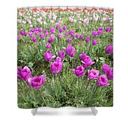 Rows Of Pink And Purple Tulip Flowers Shower Curtain