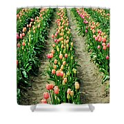 Rows Of Pink Shower Curtain