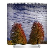 Rows Of Red Autumn Trees With Cirus Clouds Shower Curtain