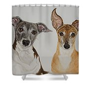 Roxie And Bruno The Greyhounds Shower Curtain