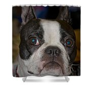 Roxy Shower Curtain