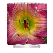 Royal Heritage Daylily Face Shower Curtain