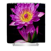 Royal Lily Shower Curtain