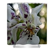 Royal Orchid  Shower Curtain