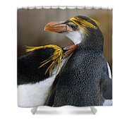 Royal Penguin Couple Courting Shower Curtain