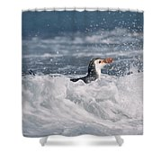 Royal Penguin Swimming In Surf Shower Curtain