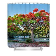 Royal Poinciana Shower Curtain