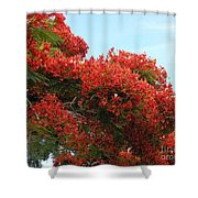 Royal Poinciana Branch Shower Curtain