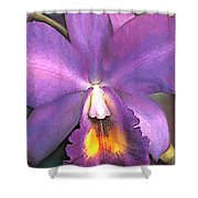 Royal Purple Cattleya Orchid Shower Curtain