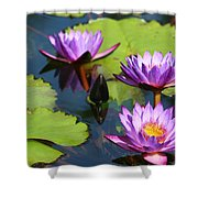 Royal Purple Water Lilies Shower Curtain