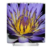 Royal Purple Water Lily #5 Shower Curtain