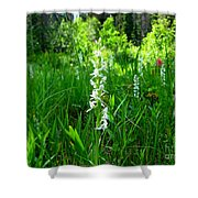 Royal Rain Orchid Shower Curtain