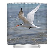 Royal Tern Flight Shower Curtain