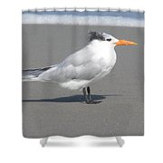 Royal Tern Seafoam Shower Curtain
