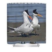 Royal Terns Dancing Shower Curtain