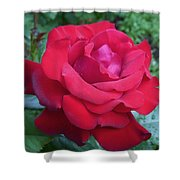 Royal Velvet Shower Curtain