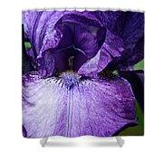 Royale Purple Petals Shower Curtain