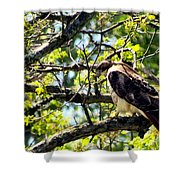 RTH Shower Curtain