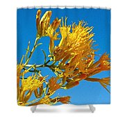 Rubber Rabbitbrush Off Hole-in-the-rock Road In Grand Staircase Escalante National Monument-utah Shower Curtain
