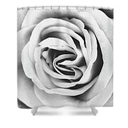 Rubellite Rose Bw Palm Springs Shower Curtain