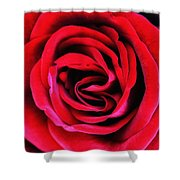 Rubellite Rose Palm Springs Shower Curtain