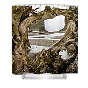 Ruby Beach Driftwood #3 Shower Curtain