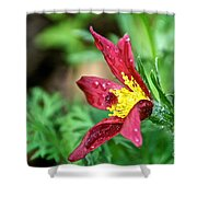 Ruby Riches Shower Curtain