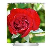 Ruby Rose Diamond Dust Shower Curtain
