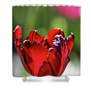 Ruby Scallops Shower Curtain